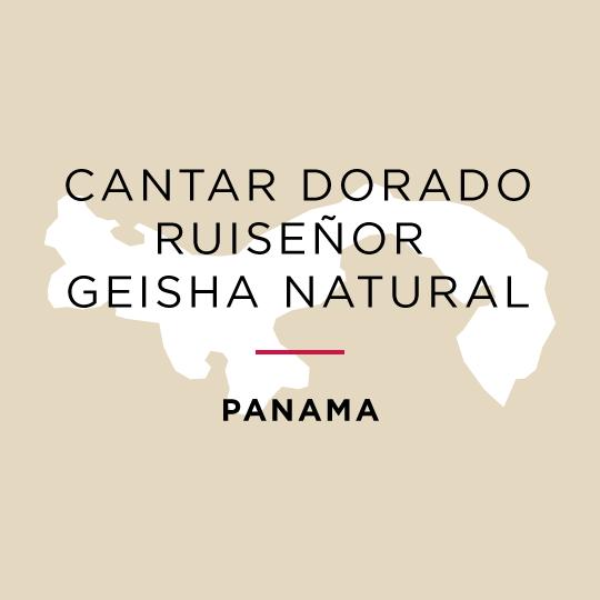 Winner *Best of Panama* Cantar Dorado Ruiseñor Geisha Natural