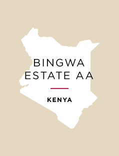 SOLD OUT - Kenya Bingwa Estate AA